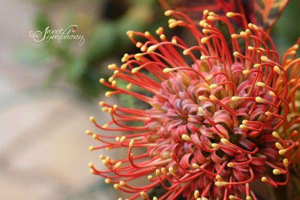 Arati-Mirji-Sugar-Flower-1-1